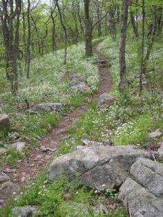 trail (2)