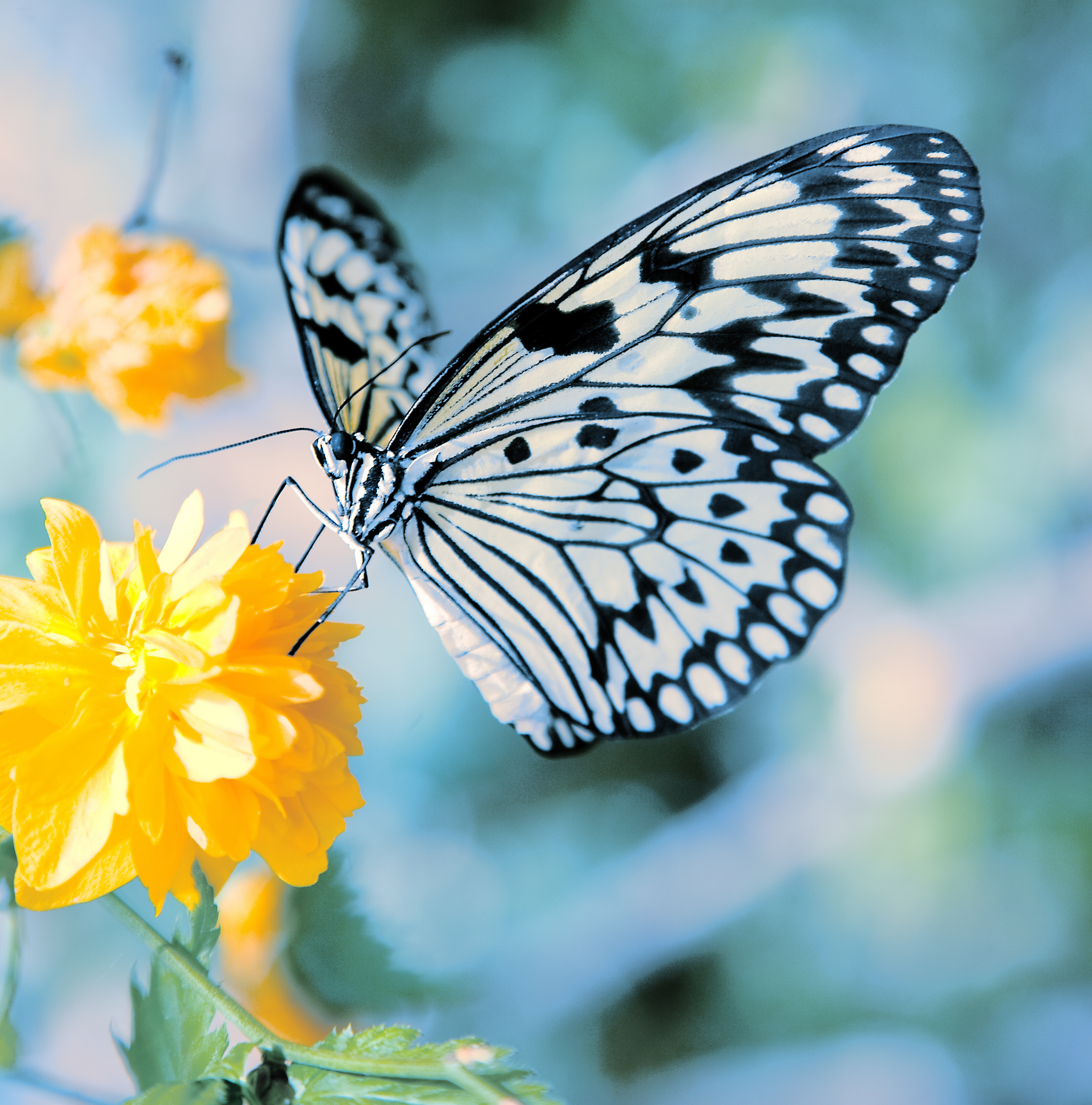 butterfly_flower_02_hd_pictures